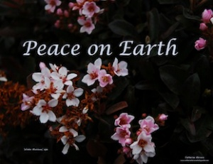 Holiday Card 'Peace on Earth, 2013, photograph by Catherine Herrera, Flor de Miel Fotos, Intl Copyright Rsvd